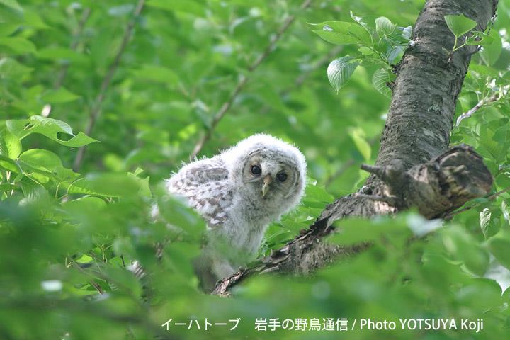 2005blog06_2