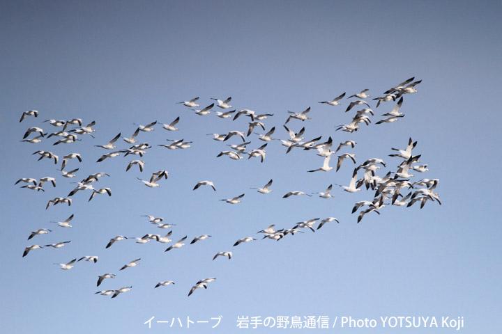 2045blog11_2