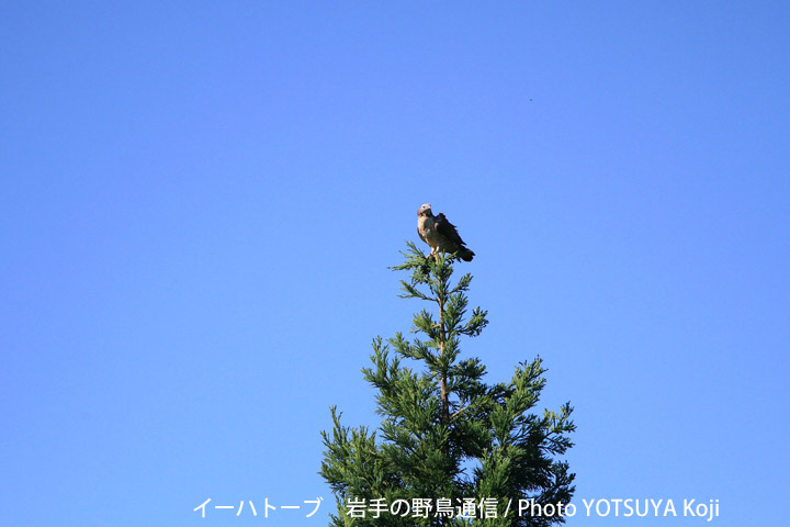 2095blog07_2
