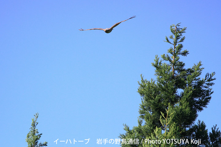 2095blog09_2