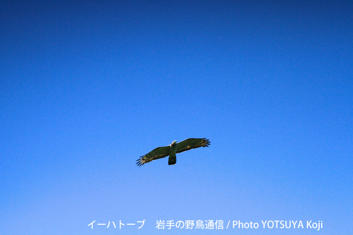 2095blog10_2