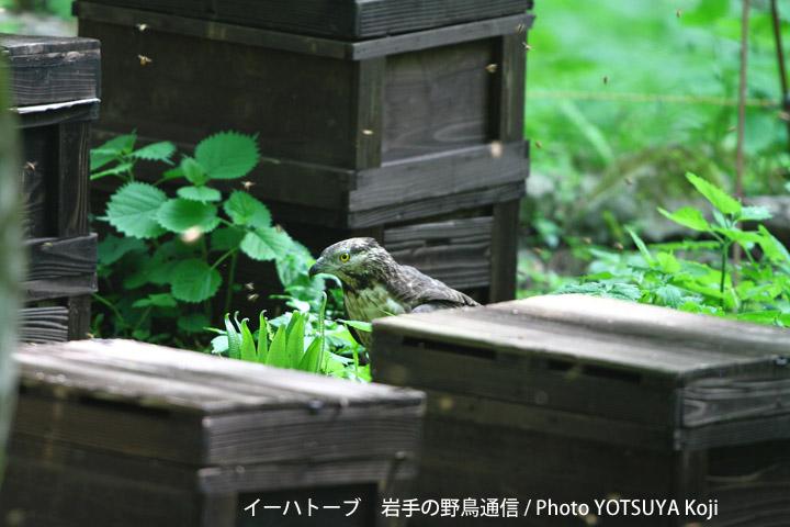 2096blog27_2