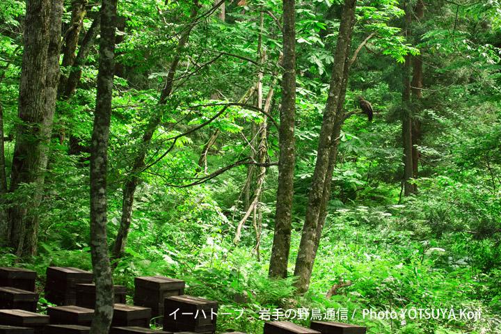3096blog03a_3